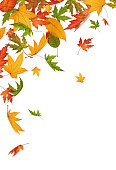 Colorful falling autumn leaves on white background.