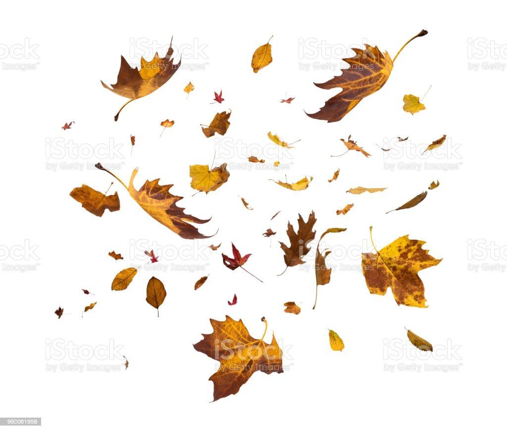 Fallen Herbst Blätter auf weißem Hintergrund – Foto