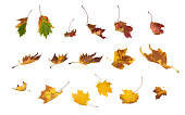 Collection of falling autumn leaves isolated on white background.