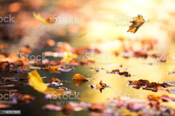 Photo of Falling Autumn Leaves