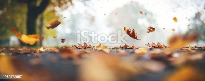 istock Falling Autumn Leaves 1262572657