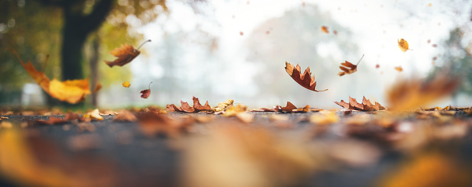 Autumn background with leaves falling to the ground in a park.