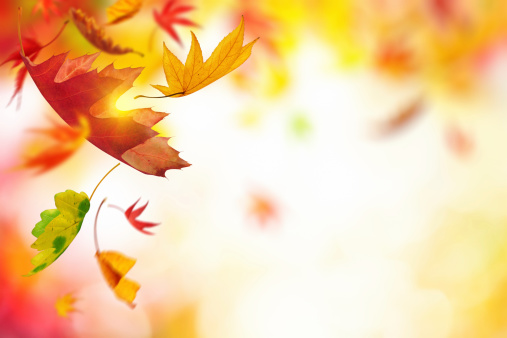 Colorful autumn leaves falling from the tree.