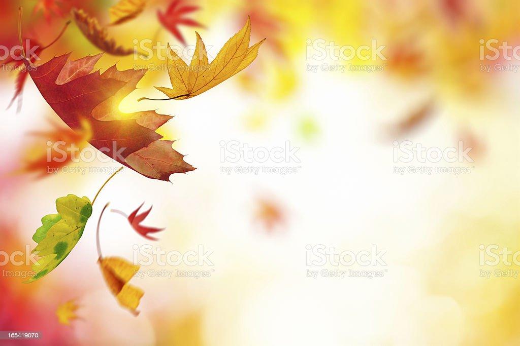 Chute feuilles d'automne - Photo