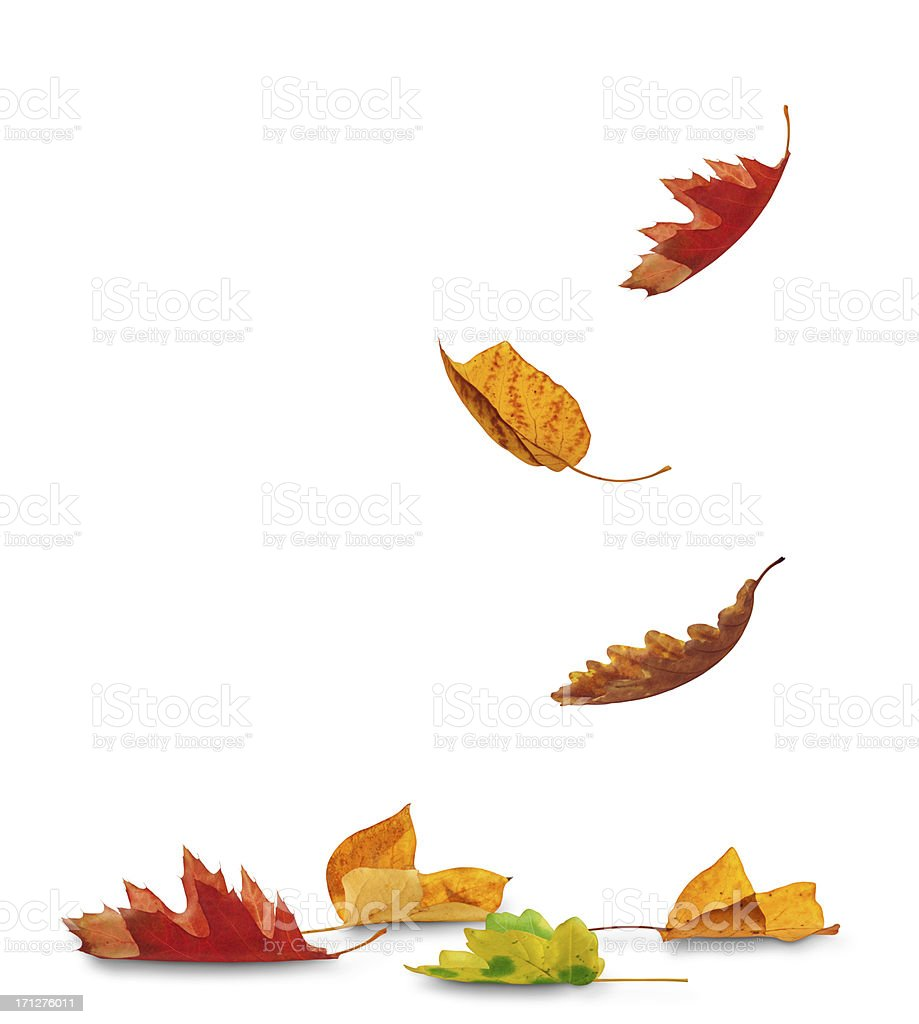 Falling Autumn Leaves stock photo