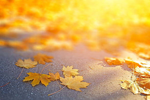 Falling Autumn Leaves Falling autumn leaves. fresh start morning stock pictures, royalty-free photos & images