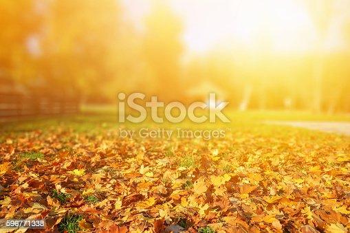 Defocused in the autumn sun lights.