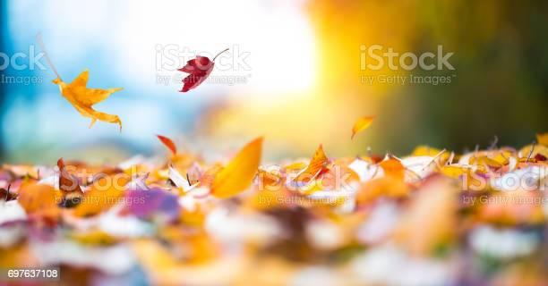 Falling autumn leaves picture id697637108?b=1&k=6&m=697637108&s=612x612&h=7rzsl5lj n9oeibqqeegnud1ouoenppyavcpq3bscps=