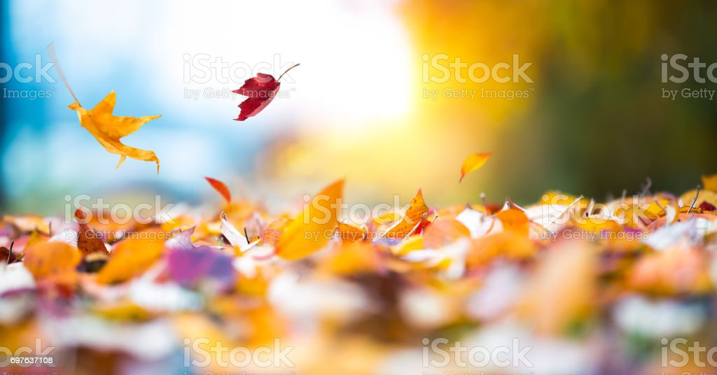 Falling Autumn Leaves - foto stock