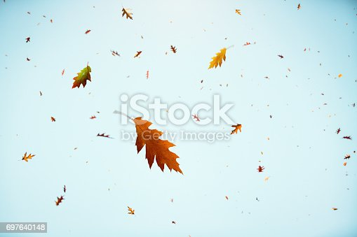 Autumn leaves falling from trees.
