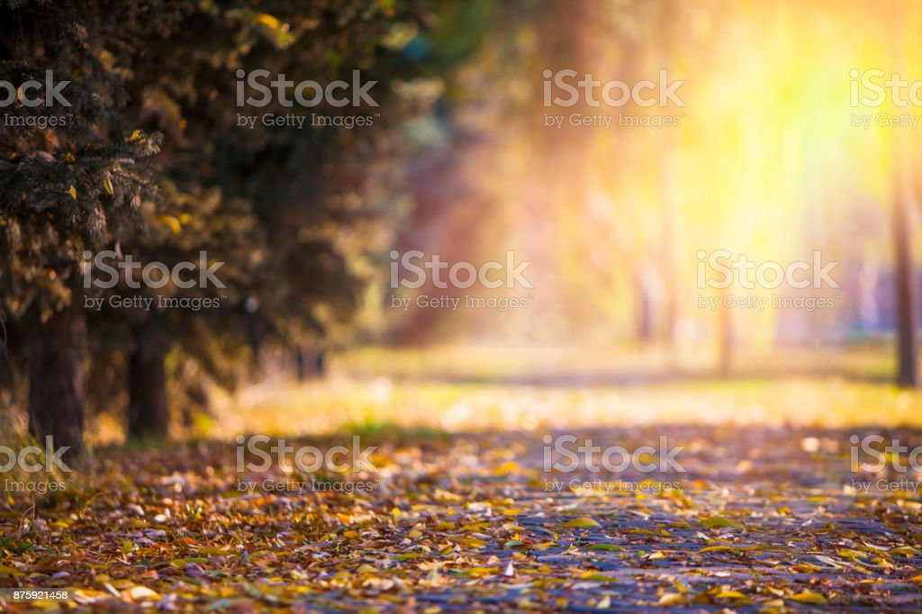 Fallende Herbst Blätter – Foto