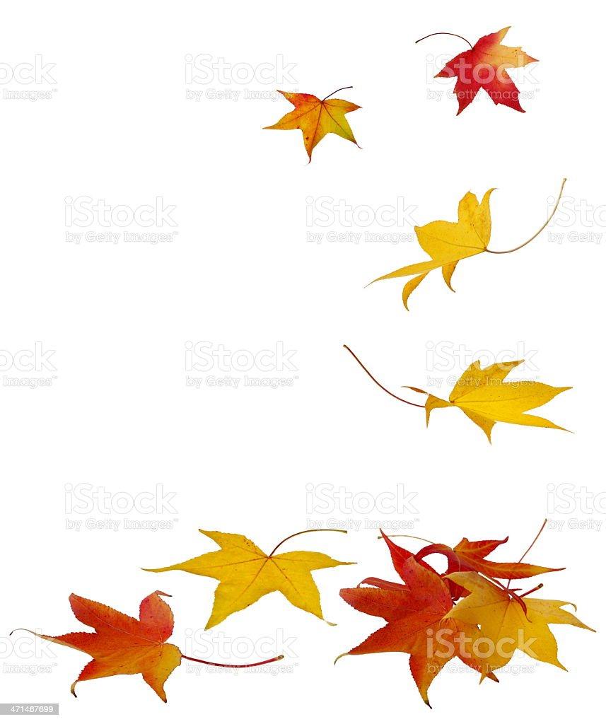Falling Autumn Leaves - XXXL royalty-free stock photo