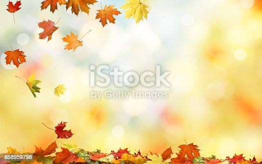 istock Falling autumn maple leaves natural background .Colorful foliage 858959798
