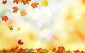 立ち下がり秋のカエデの葉自然な背景。カラフルな葉