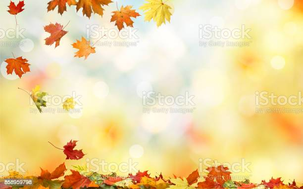Falling autumn maple leaves natural background colorful foliage picture id858959798?b=1&k=6&m=858959798&s=612x612&h=4wdpr4abjxcyxfw vz qhkcm9fetii0qqadmarmgj w=