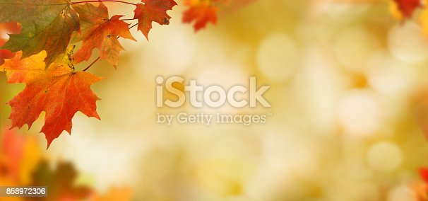 istock Falling autumn maple leaves natural background .Colorful foliage 858972306
