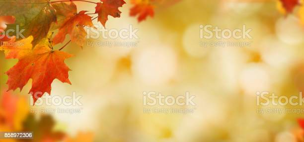 Photo of Falling autumn maple leaves natural background .Colorful foliage