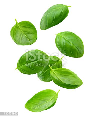 Falling basil, isolated on white background, clipping path, full depth of field