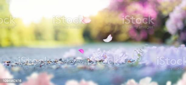 Falling cherry petals picture id1094982416?b=1&k=6&m=1094982416&s=612x612&h=tpjqt3hehlc bcpsrsrp44gom7epghpfaumtdicyq0q=