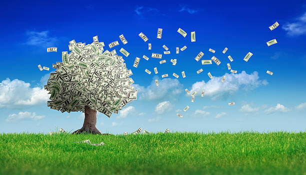 falling dollar bills from money tree  money tree in green field over clear sky.  money tree stock pictures, royalty-free photos & images