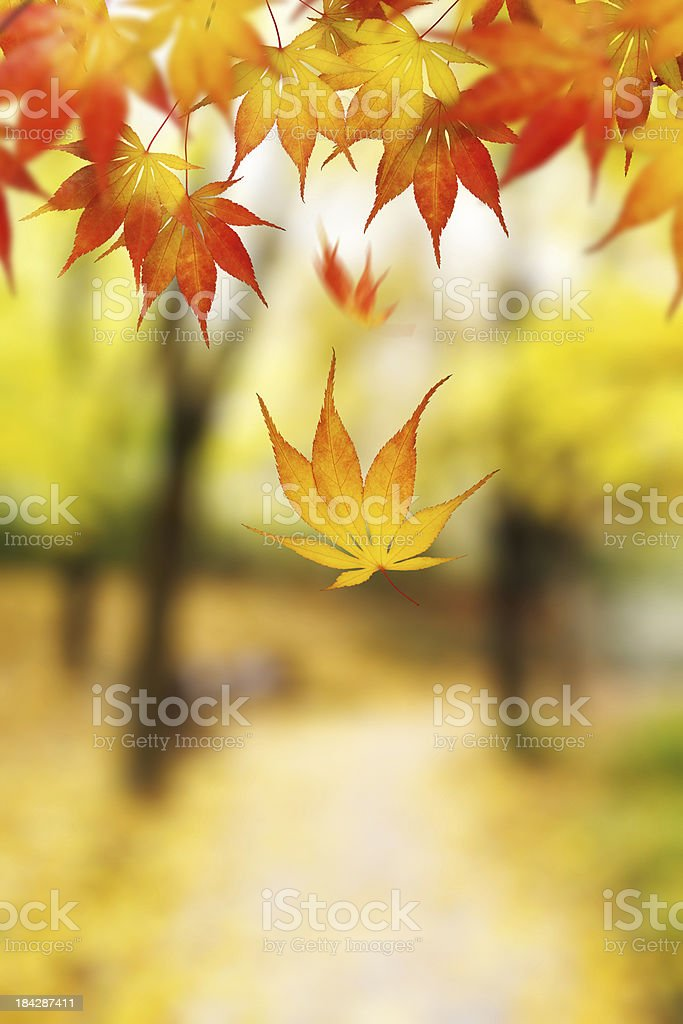 Falling From The Tree royalty-free stock photo