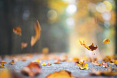 Autumn background with leaves falling to the ground.