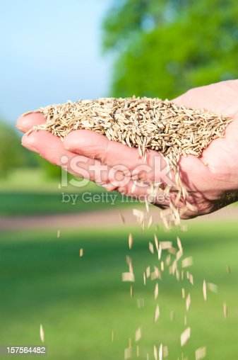 Sowing grass seed in spring.