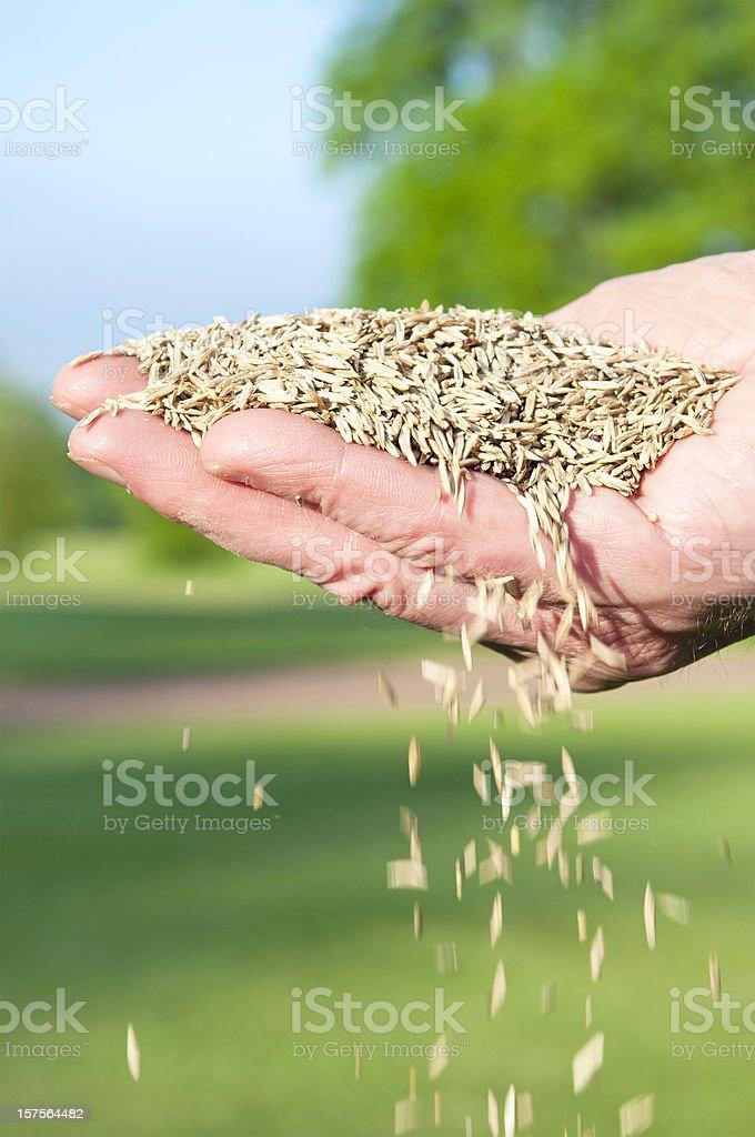 Falling Grass Seed stock photo