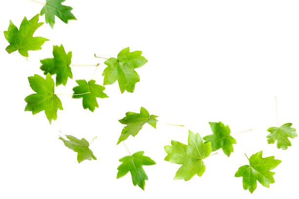 Falling green leaves flying in the air stock photo