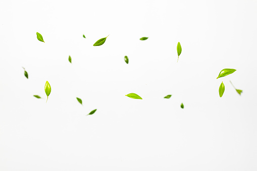 Falling green leaves on white background. Levitation concept