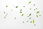 istock Falling green leaves. Top view, Flat lay, Summer harvest concept 1253250742