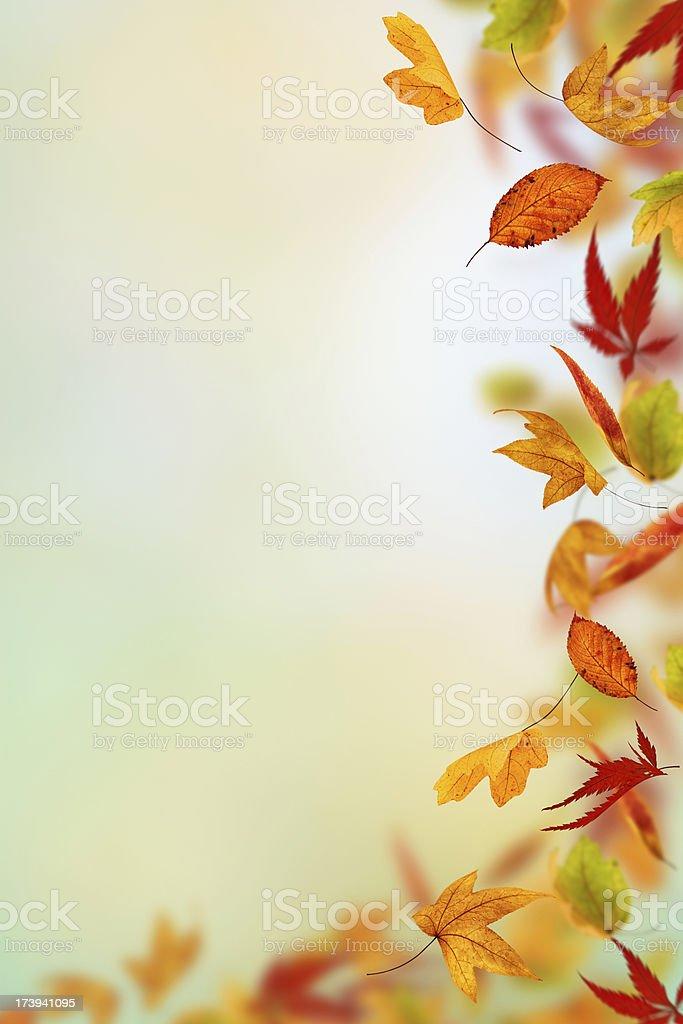 Falling Leaf Frame royalty-free stock photo