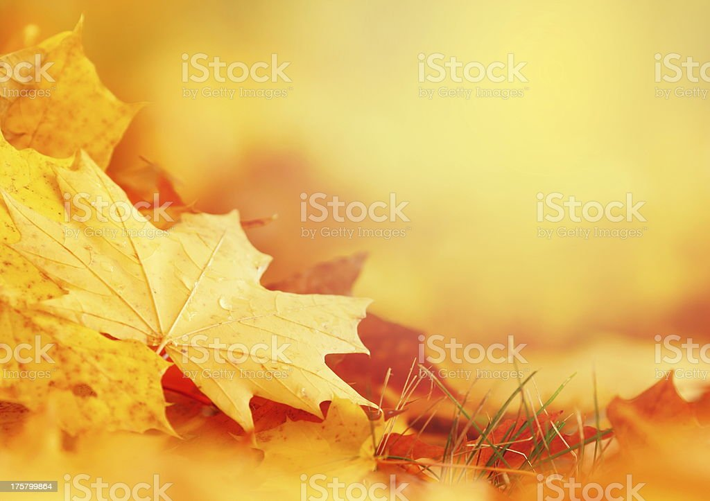 Falling Leaf Frame royalty-free stock photo