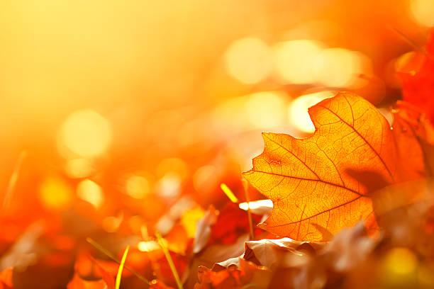 quadro de folhas caindo - setembro amarelo - fotografias e filmes do acervo