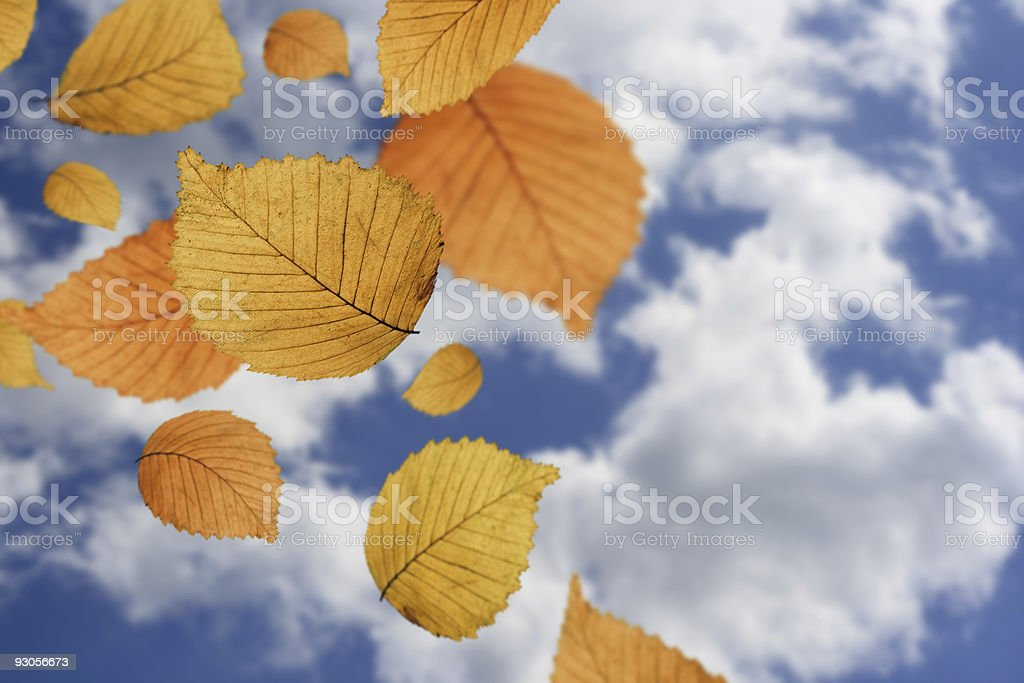 Falling Leaves Against Blue Sky royalty-free stock photo
