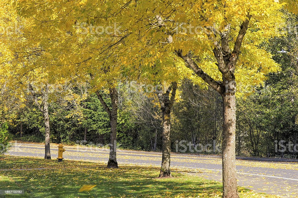 Falling Leaves from Neighborhood Beech Trees royalty-free stock photo