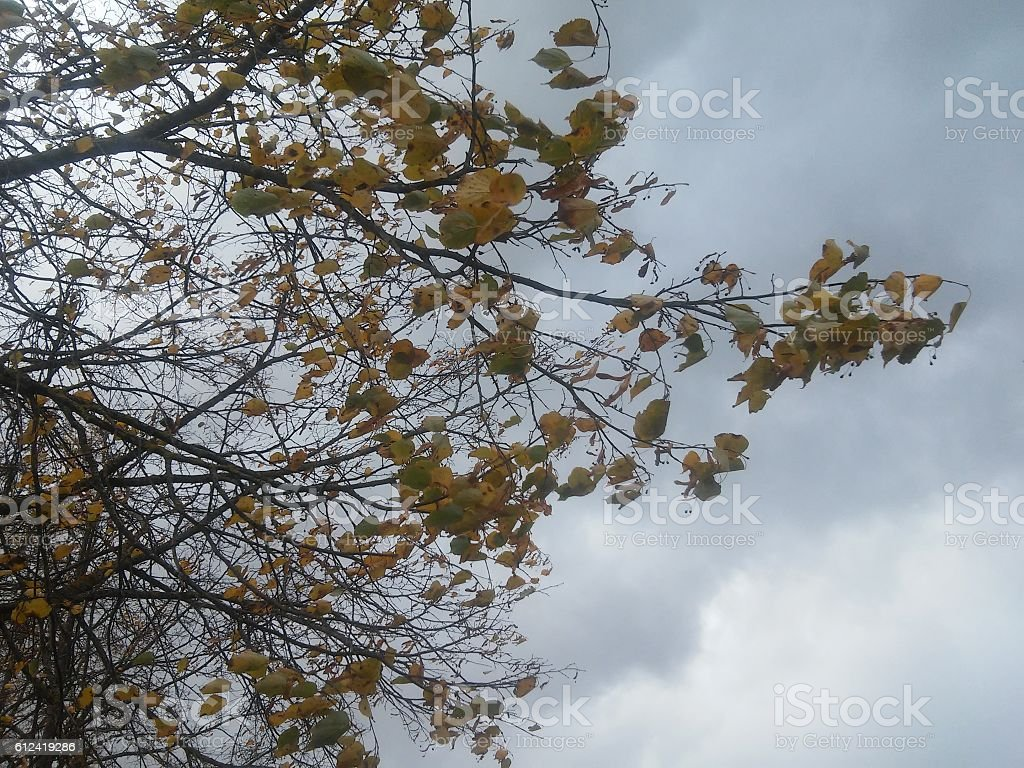 Falling leaves from tree in autumn stock photo