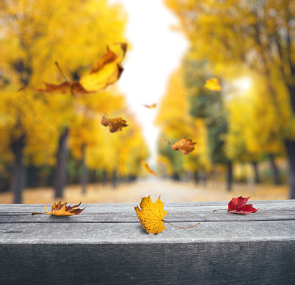 Autumn landscape, autumn in the city park. City park bench in the fall park, yellow fallen leaves , autumn trees and golden autumn leaves
