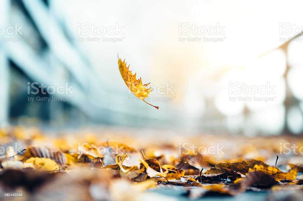 Falling Leaves In Autumn stock photo