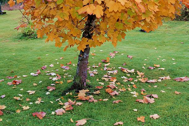 Falling leaves in october stock photo