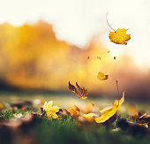 Falling autumn leaves in a park.