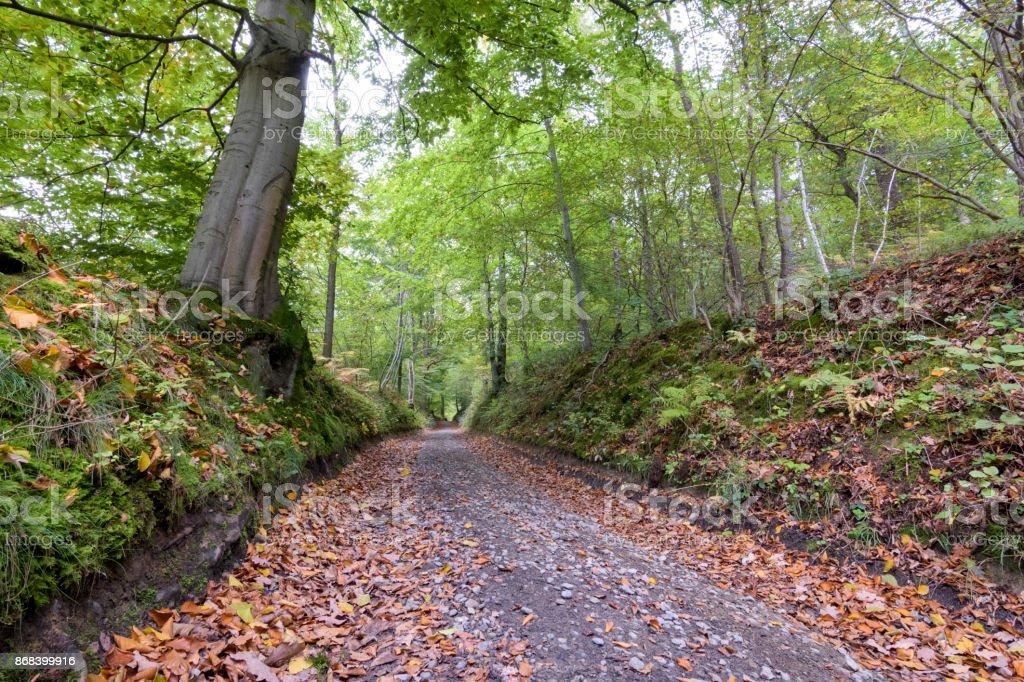 Feuilles qui tombent sur la pittoresque forêt chemin moody et sombre paysage d'automne - Photo