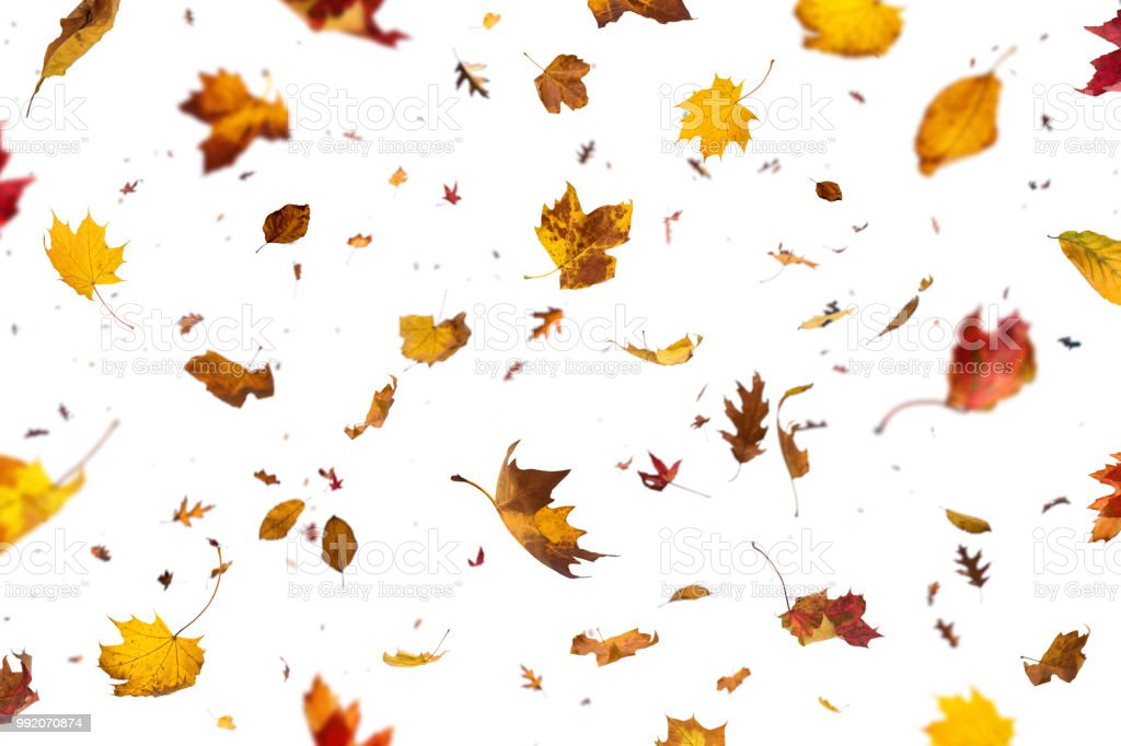Falling Leaves On White Background stock photo