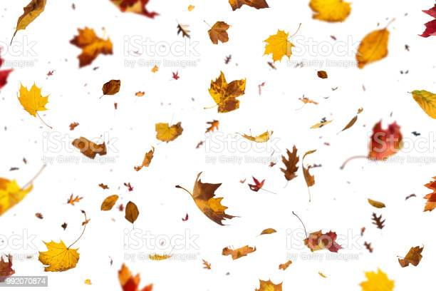 Photo of Falling Leaves On White Background