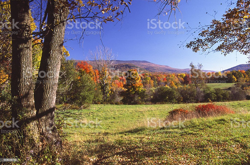 Falling Leaves stock photo