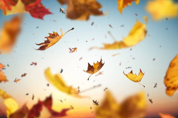 Falling Leaves Background with falling autumn leaves. november stock pictures, royalty-free photos & images