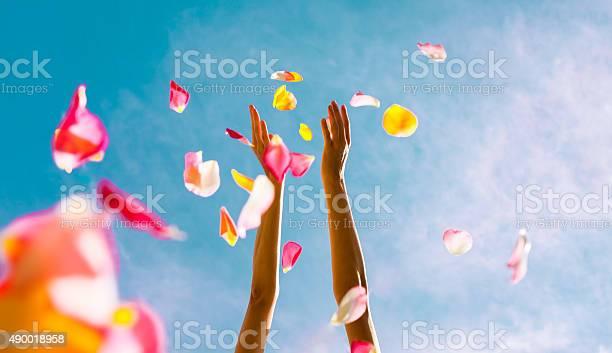 Falling petals picture id490018958?b=1&k=6&m=490018958&s=612x612&h=he1q0jxvnnn2zttu9oxqlvofzg0 nim2wppd7xns0zg=