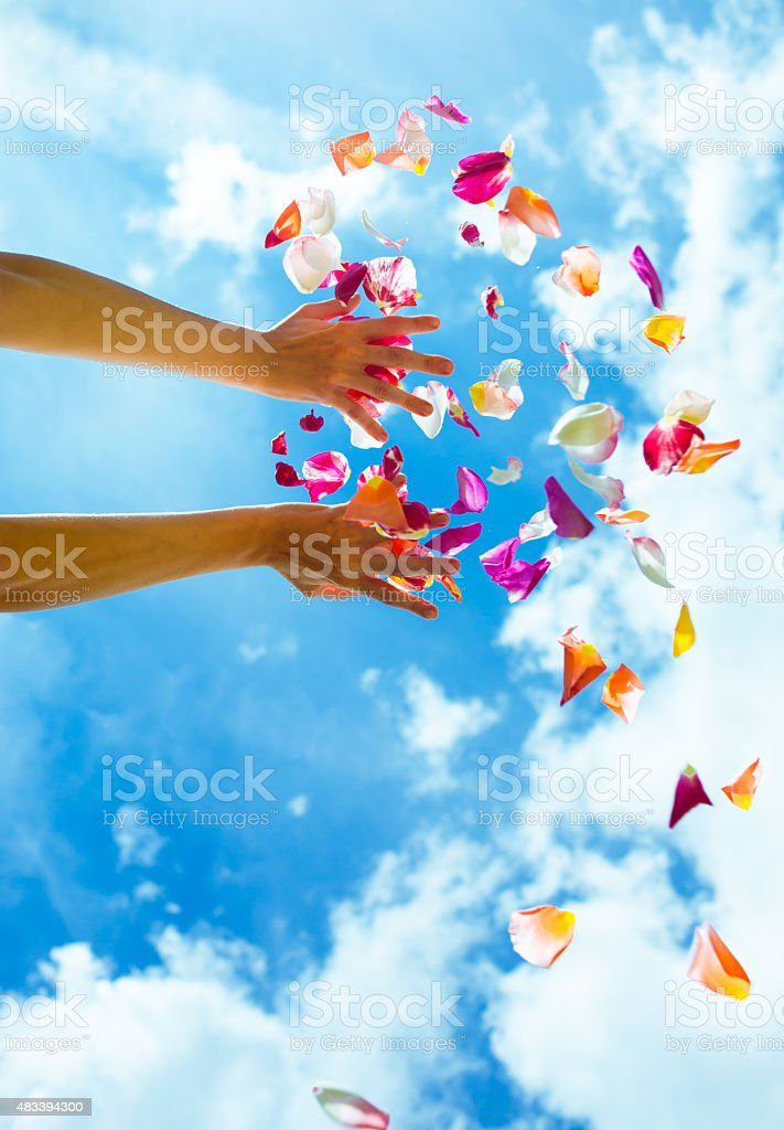Falling rose petals stock photo
