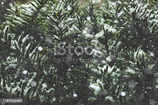 istock Falling Snow Cold Winter Christmas Snowflakes Texture Over Evergreen Pine Tree Branches Background 1187043464
