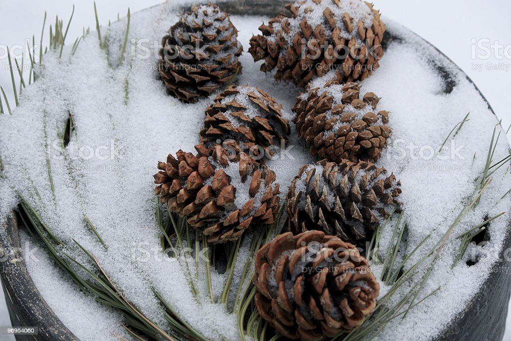 Falling Snow on Pine Cones royalty-free stock photo
